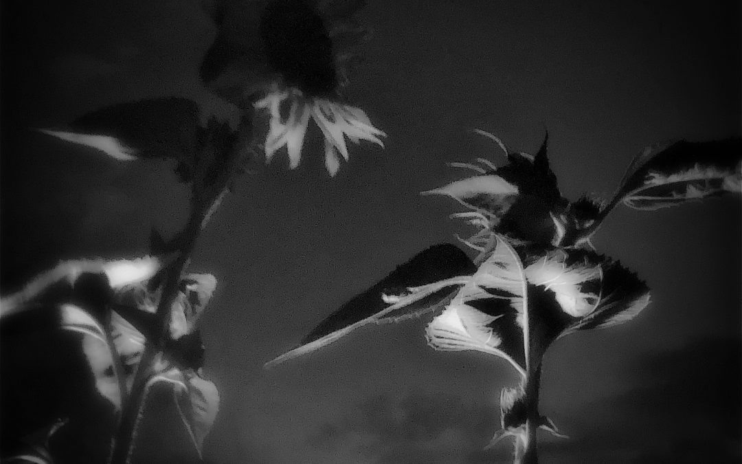Meri Walker ~ Sundown.