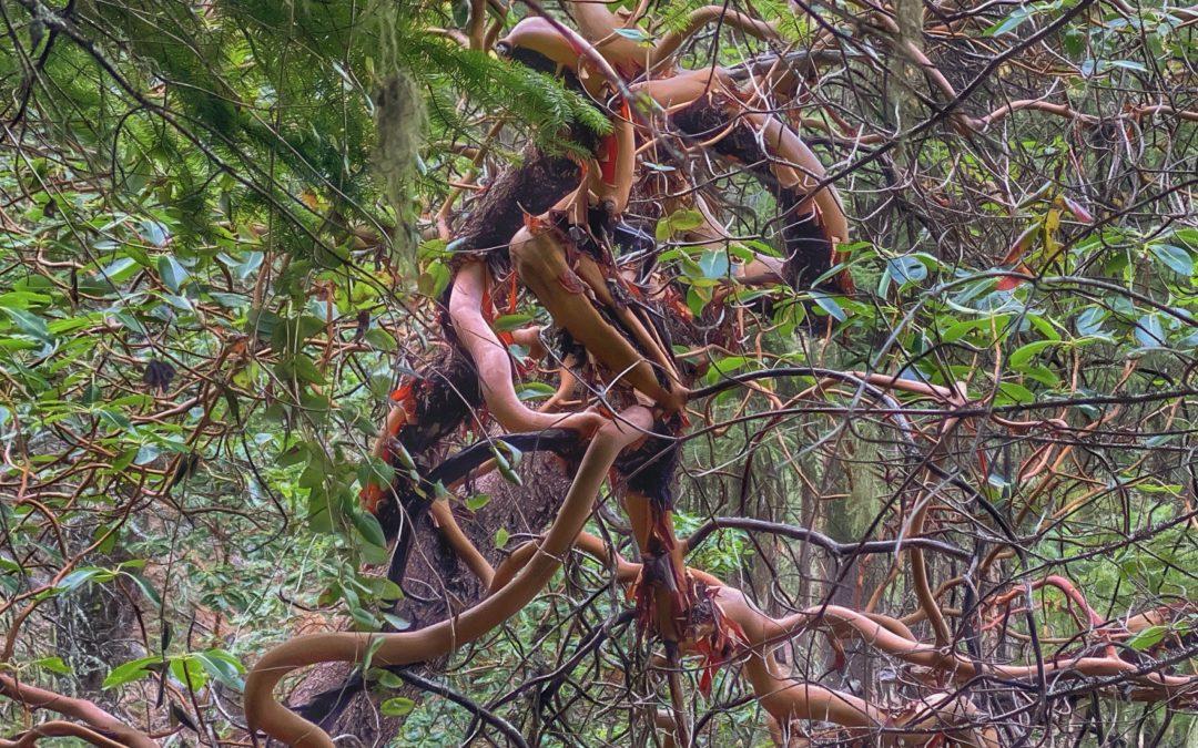 {sunday} David Scott Leibowitz ~ Toothpick Trail