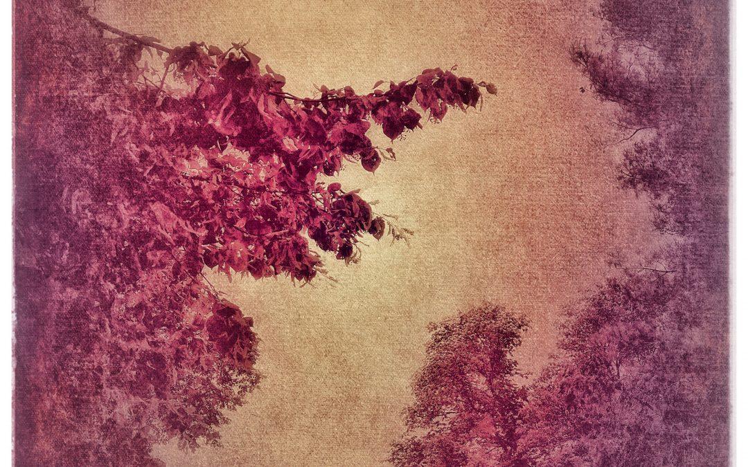 Adam Mead ~ Her delicate embrace