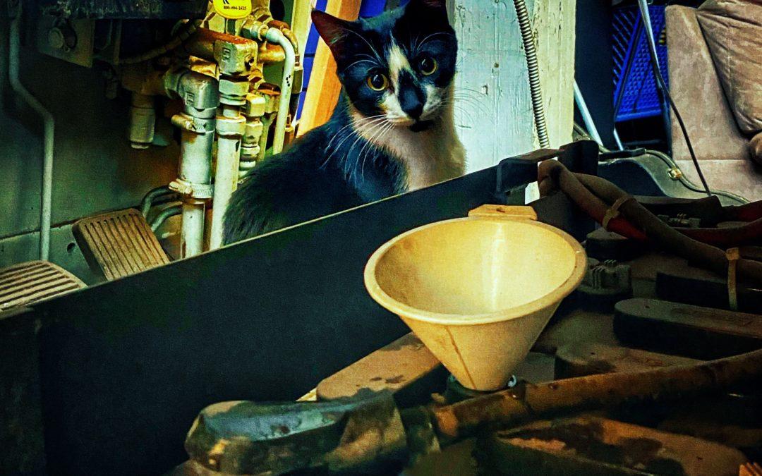 Knox Bronson ~ The Mechanic