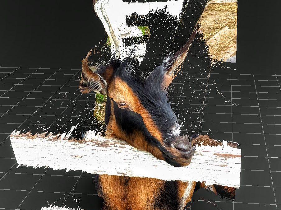 David Scott Leibowitz ~ Mini Goat