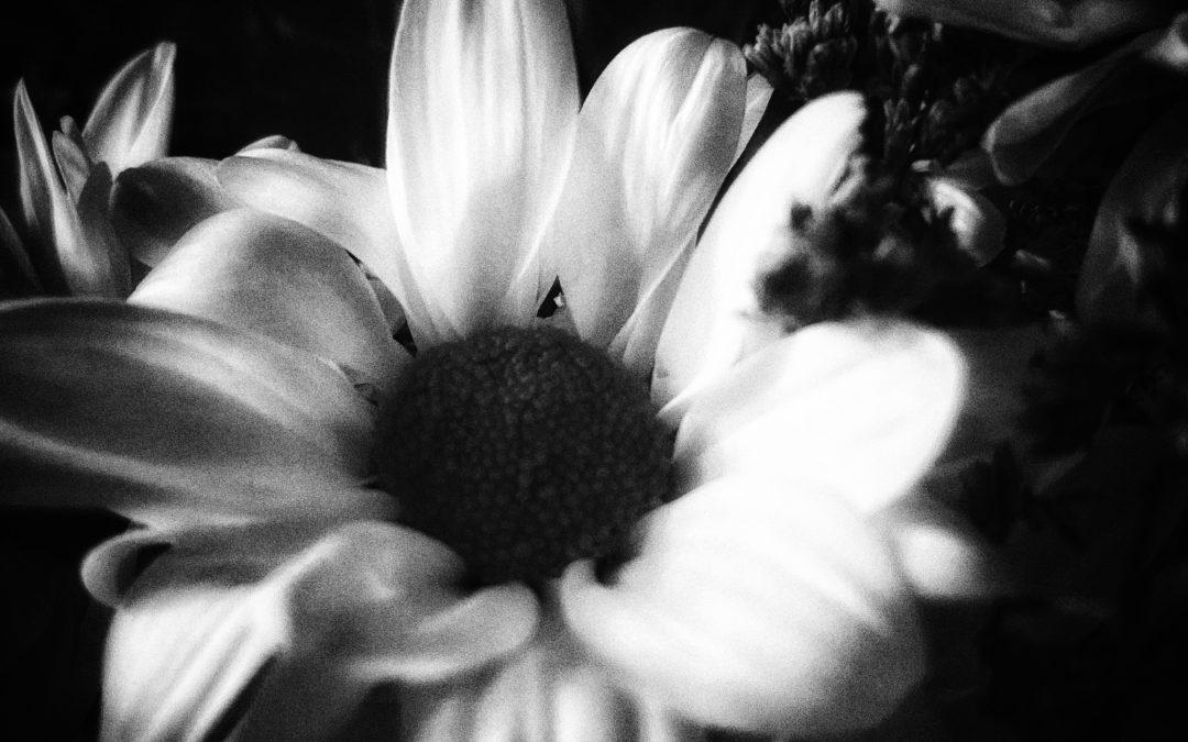 Amo Passicos ~ Untitled