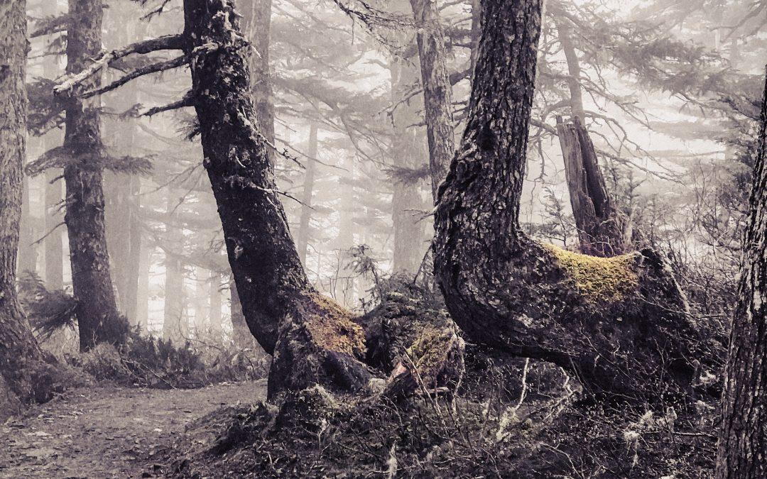 Irene Oleksiuk ~ Spirit forest