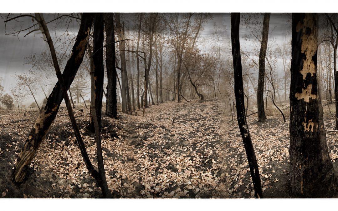 David Scott Leibowitz ~ Beautiful Day on Bear Creek