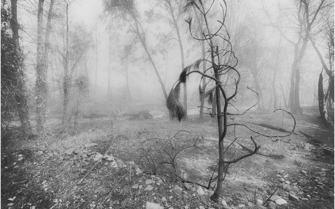 David Scott Leibowitz ~ Details in the Fog