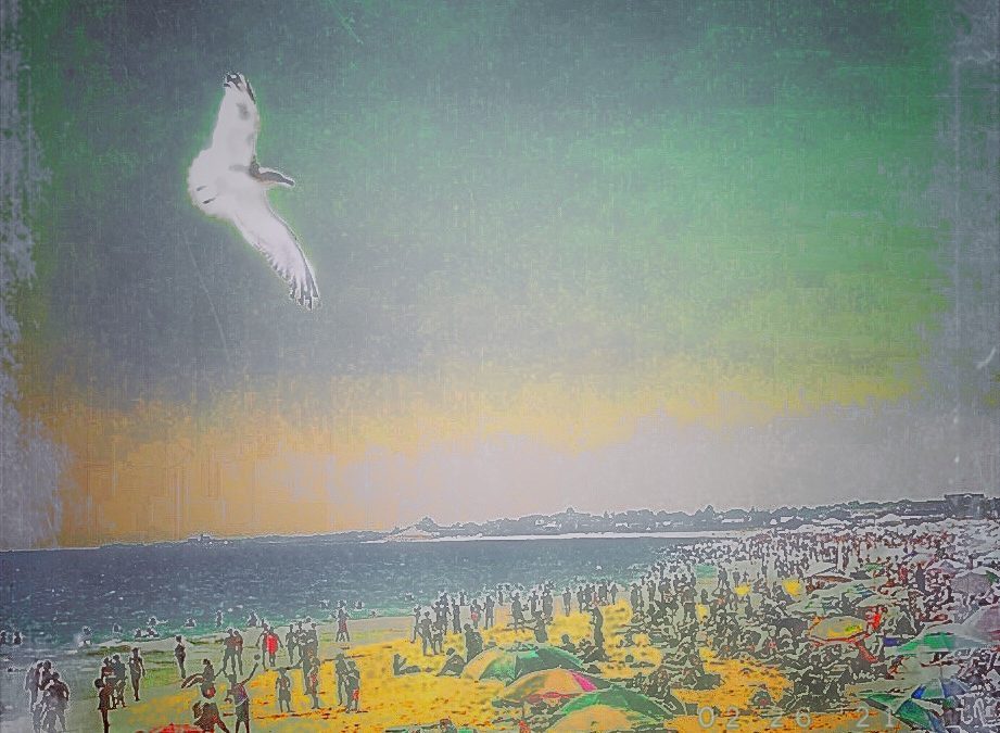 Paul Toussaint ~ Seagull You Fly