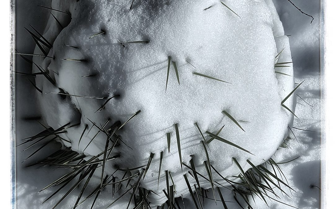 Jan Uiterwijk ~ Avoid the Icecold Round Covid Variant