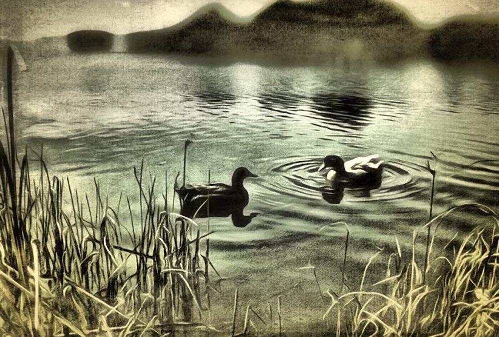 Maia Panos ~ Two Ducks