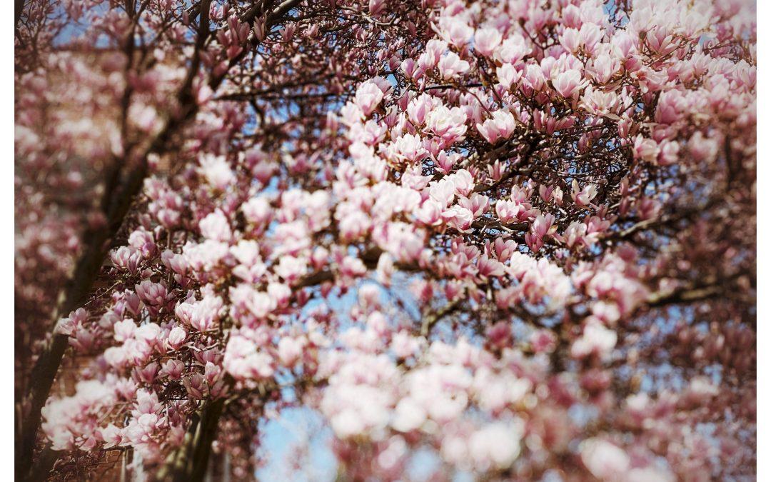 Adam Mead ~ Spring's tender migration …