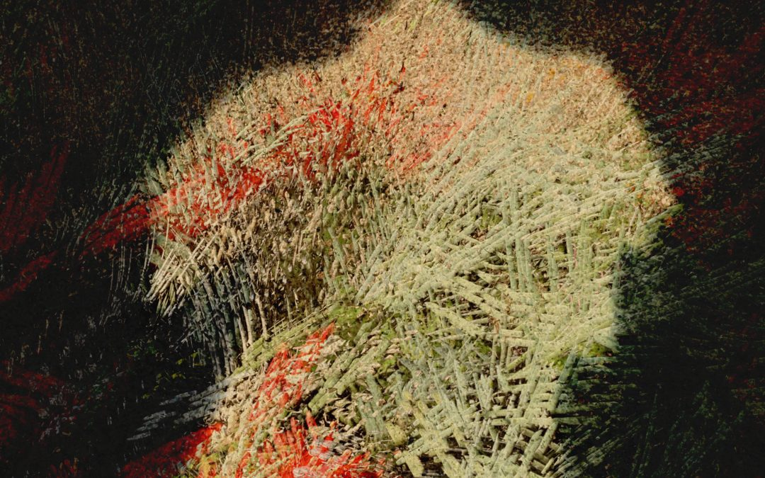 J.R. Metcalf ~ Plant Man