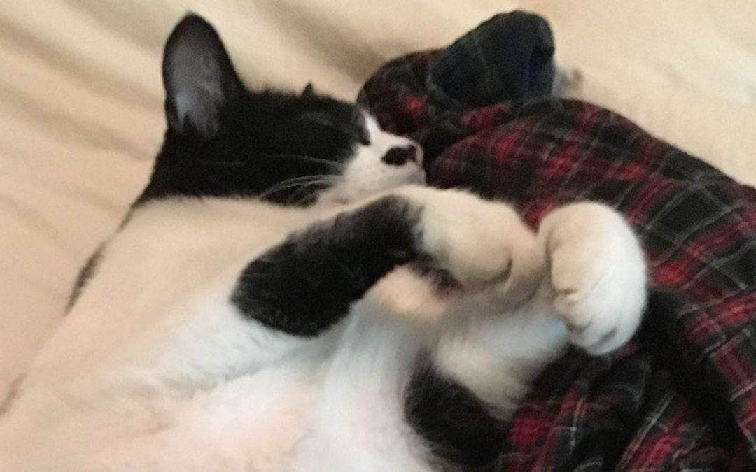 {podcast} Oreo Snoring and Shakuhachi Duet